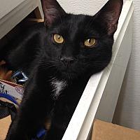 Adopt A Pet :: Peppermint - Houston, TX