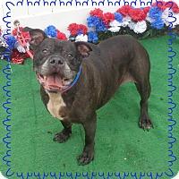 Adopt A Pet :: BRUNO - Marietta, GA