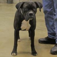 Adopt A Pet :: 35277557 - Cleveland, AL