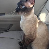 Adopt A Pet :: Oscar 3 - Austin, TX