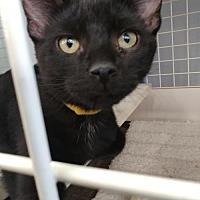 Adopt A Pet :: Drake - South Saint Paul, MN