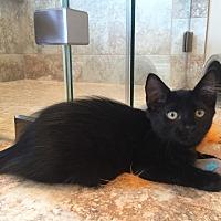 Adopt A Pet :: Chili - Houston, TX