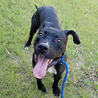 Adopt A Pet :: Tyler - Decatur, GA