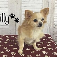 Adopt A Pet :: Willy - Dallas, TX