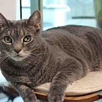 Adopt A Pet :: JUSTICE - Hampton Bays, NY