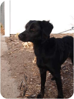 Terrier (Unknown Type, Small) Mix Dog for adoption in Columbus, Nebraska - Missy
