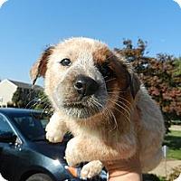Adopt A Pet :: Sylvia - South Jersey, NJ