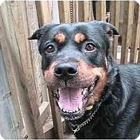 Adopt A Pet :: Mini - Forest Hills, NY