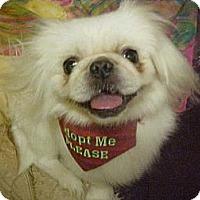Adopt A Pet :: Clint - Cathedral City, CA
