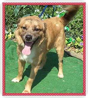 Retriever (Unknown Type) Mix Puppy for adoption in Marietta, Georgia - KOVIE- See Video!