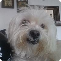 Adopt A Pet :: Freddy - Playa Del Rey, CA