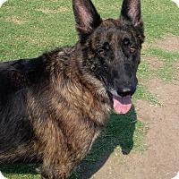 Adopt A Pet :: Arthur - Norman, OK