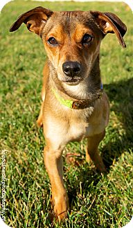 Dachshund Mix Dog for adoption in Worcester, Massachusetts - Jumpy