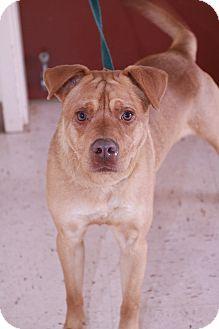 Labrador Retriever Mix Dog for adoption in McDonough, Georgia - Clay