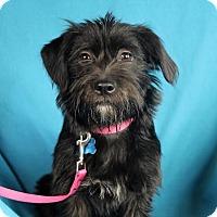 Adopt A Pet :: Lexie - Minneapolis, MN