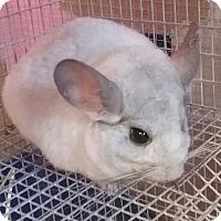 Adopt A Pet :: Thumper - Granby, CT