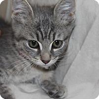 Adopt A Pet :: Mateo - tampa, FL