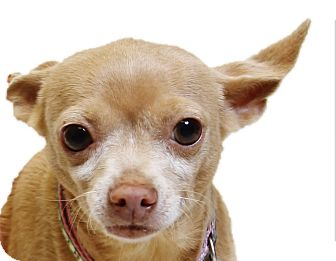 Mixed Breed (Small) Mix Dog for adoption in Truckee, California - Minnie