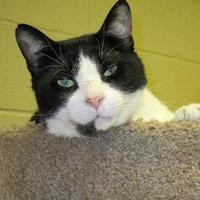 Adopt A Pet :: Wayne - Erie, PA