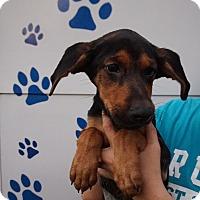 Adopt A Pet :: Melina - Oviedo, FL