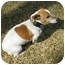Photo 2 - Jack Russell Terrier Dog for adoption in Thomasville, North Carolina - Jackson