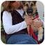 Photo 2 - German Shepherd Dog Puppy for adoption in Los Angeles, California - Freddy von Sayers - PETITE