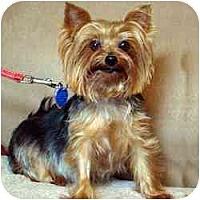 Adopt A Pet :: Tessi - Suwanee, GA