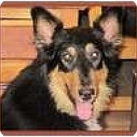 Adopt A Pet :: Utah - Trabuco Canyon, CA