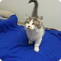 Adopt A Pet :: Petra - St. Louis, MO
