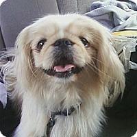 Adopt A Pet :: Hurricane - Vansant, VA