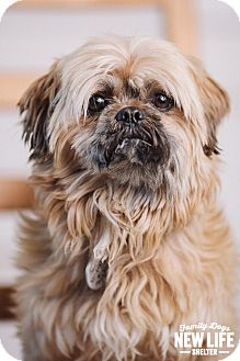Lhasa Apso Mix Dog for adoption in Portland, Oregon - Chewy