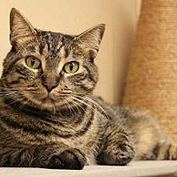 Adopt A Pet :: Reina - Mebane, NC