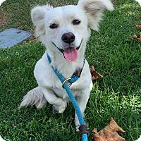 Adopt A Pet :: Falcor - Mission Viejo, CA