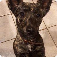 Adopt A Pet :: Tina in CT - Manchester, CT