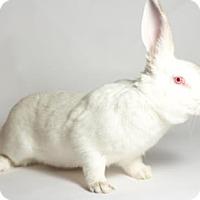 Adopt A Pet :: Minnie - Kingston, ON