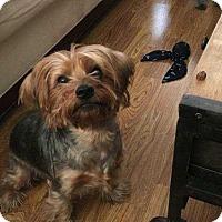 Adopt A Pet :: Ghilly - sylmar, CA