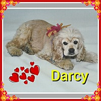 Adopt A Pet :: Darcy - Santa Barbara, CA