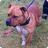 Adopt A Pet :: Bossy - Metamora, IN