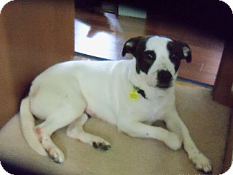 Terrier (Unknown Type, Medium) Mix Dog for adoption in Davenport, Iowa - Molly