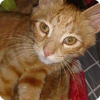 Adopt A Pet :: CJ - Covington, PA