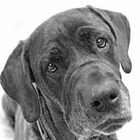 Adopt A Pet :: Mulan - Washington, DC