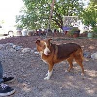 Adopt A Pet :: Lali - Golden Valley, AZ