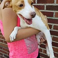 Adopt A Pet :: Sissy - Ridgefield, CT