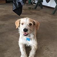 Adopt A Pet :: Monty - Santa Monica, CA