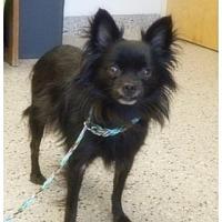 Adopt A Pet :: Cute QUINCEY - Napa, CA