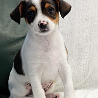 Adopt A Pet :: Jeff - Long Beach, NY