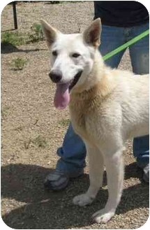 Shepherd (Unknown Type) Mix Dog for adoption in Florence, Indiana - Gypsy