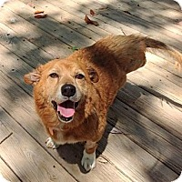 Adopt A Pet :: Maggie (FKA Nancy) - New Canaan, CT