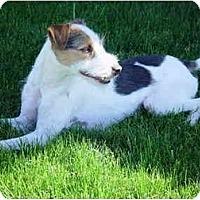 Adopt A Pet :: OTIS - Scottsdale, AZ