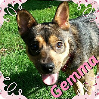German Shepherd Dog/Chihuahua Mix Dog for adoption in Newnan, Georgia - Gemma